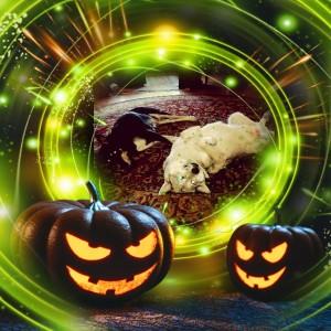 haloween-hundar
